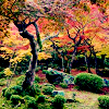 autumn avatar