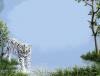 Tiger frame