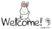 Bunny Welcome